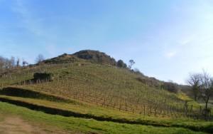 Domaine Pithon-Paillé - Coteau des Treilles