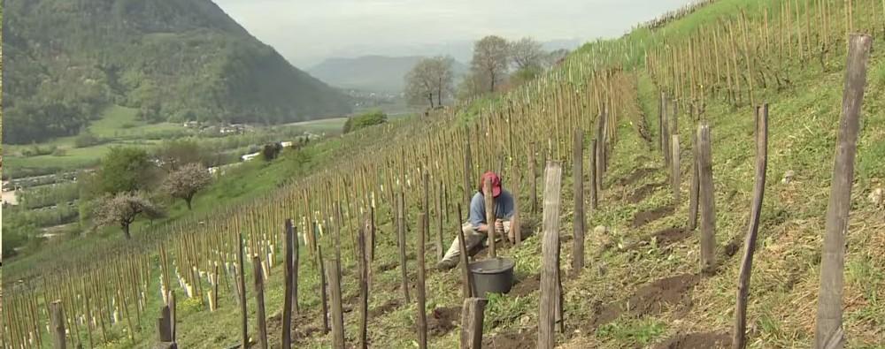 les vignerons de la reconquete 2