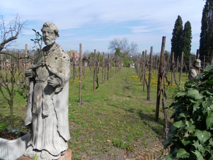 Le vignoble de Torcello