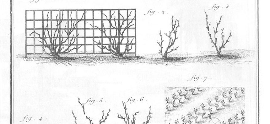 encyclopedie-planche-culture-de-la-vigne